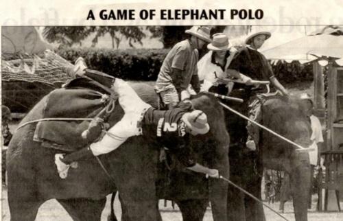 elephant-polo3