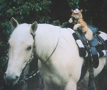 horse-and-other-cat