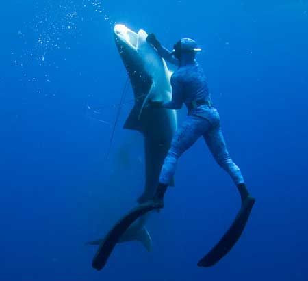 diver-vs-shark-03