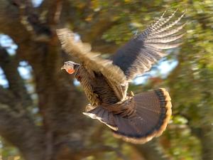 Bald Eagle. Photo by Edgar Martins