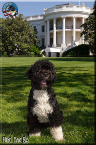 Bo_Obama_White_house_portrait