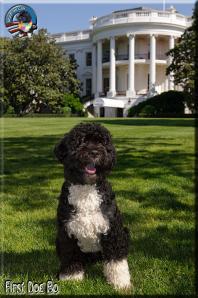Bo_Obama_White_house_portrait