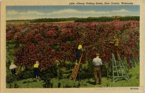 cherry-picking-scene-door-county-us-state-town-views-wisconsin-door-county-7413