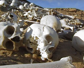 mass-grave-278x225