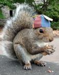 Solar powered squirrel