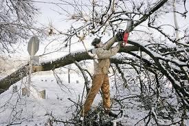 Rep. Jimbo Himes (D., CT) drops tree on neighbor's home