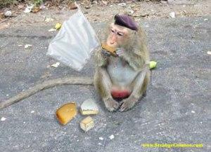 Surrender monkey