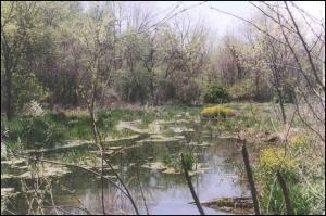 "Denise Savegeau Memorial Pond: ""It's only natural"""