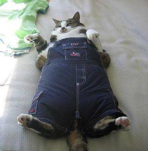 Fat cat conservative