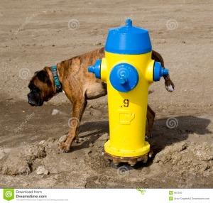 The EPA and a yellow dog Democrat