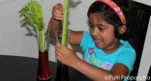 Rosita delights in celery stalk Valentines from her admirers, Billy and Joey
