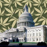 WashingtonDCmedicalmarijuana3001