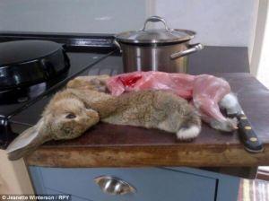 """Rabbit ate my parsley. I am eating rabbit."""