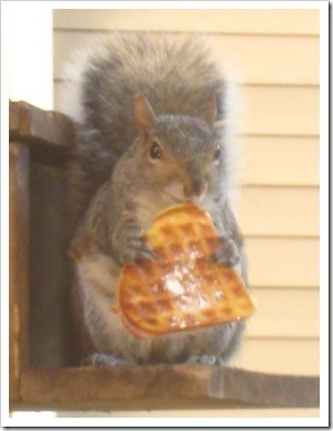 More popular than their famous Waffle Squirrel™?