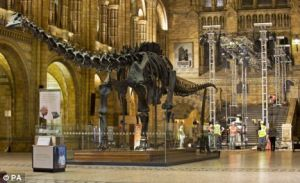 Dippy gets the heave-ho