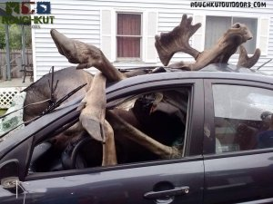Now, driving with a moose in the front seat, THATS an issue