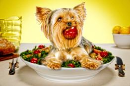 Dog on platter