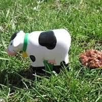 cow patties