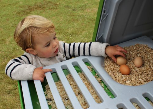 Toddler_removing_eggs_from_the_eglu_go_up