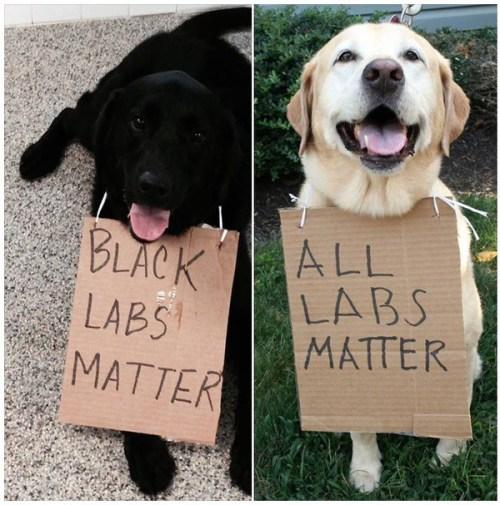 black-labs-matter